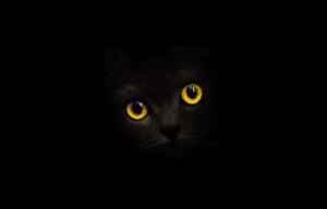 Blackcatcard Promo Code 6